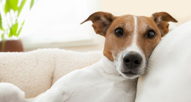 Insuring your home with a dog